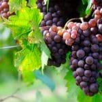 Se former aux métiers du vin