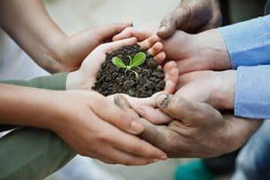 Les Mains Tenant Le Sol Avec Une Petite Plante Verte